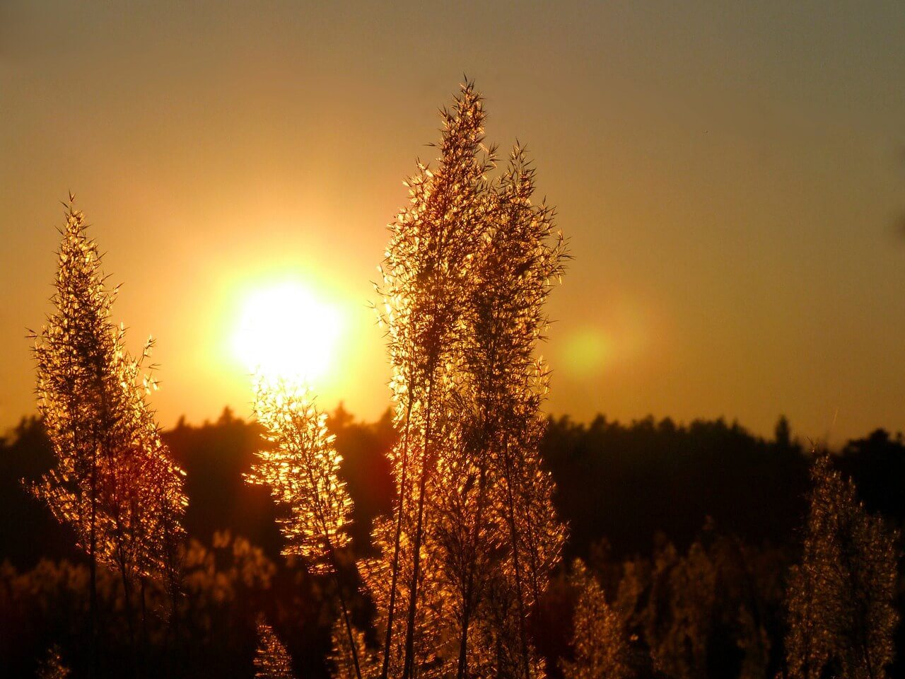 sunset_aura